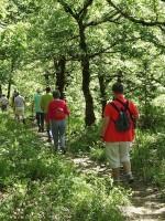 Gemakkelijk wandelen in de bossen van Zagori